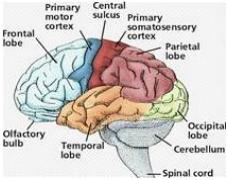 Alzheimer's, Memory Loss, Autism = Brain Degeneration